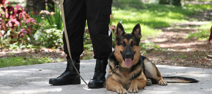 Securite et gardiennage pour les professionnels