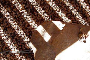 ombre des lames de pergola sur une chaise en teck