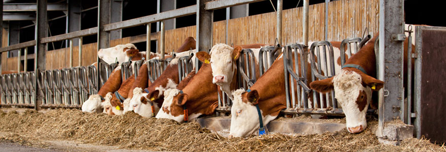 Audit nutrition en élevage bovin